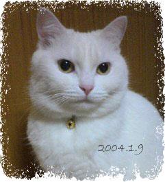 20080628(aa).jpg