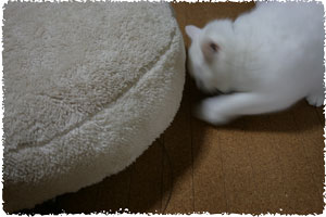 20081114(ad).jpg