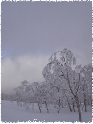 20090310(aa).jpg